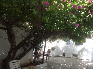 Paros - Apollon - Bougainvillea TREE - not a climber!